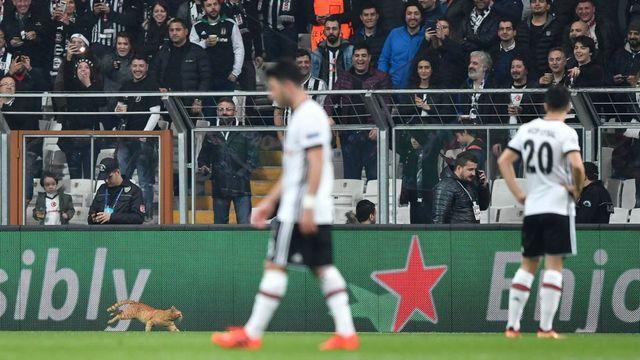 UEFA'dan Beşiktaş'a 'kedi' soruşturması